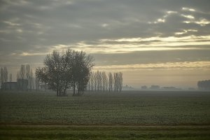 The landscape with the fog