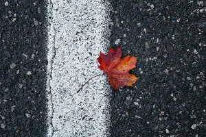 Red leaf on the road