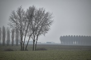 The tree and the fog