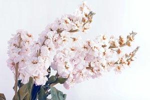 Flower soft white bouquet background