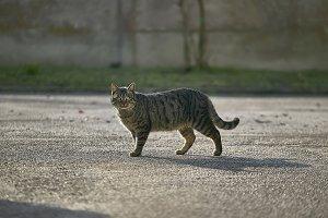 The cat's walk