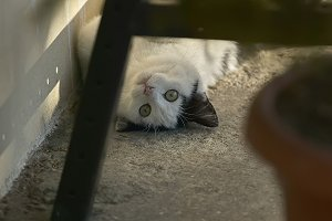 The kitten playing under the bench.