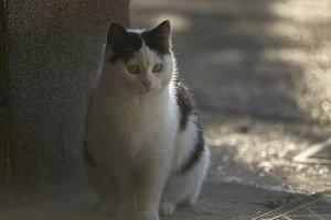 Portrait of a small white kitten