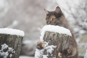 Scared cat on an old snow-covered
