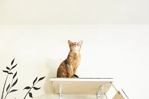 funny cat with white wall background