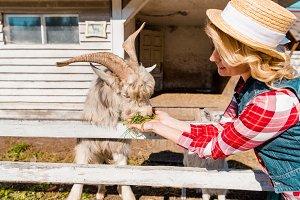 woman in straw hat feeding goat by g