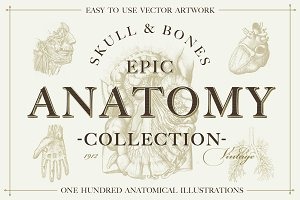 +100 Vintage Anatomy Vectors