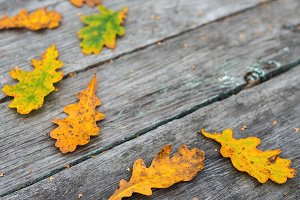 wooden grey background with autumn l
