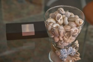The vase of shells