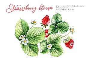 Strawberry bloom watercolor