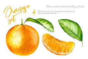 Orange Set. Watercolor clipart