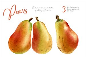 Pears. Watercolor botanical clipart