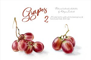 Grapes. Watercolor botanical clipart