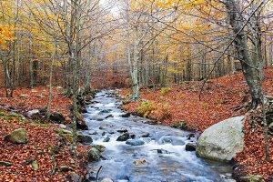 Creek Across Autumn Forest