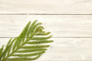 Christmas frame of fir branches