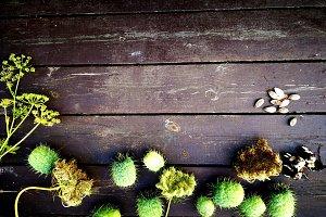 Autumn  seeds, wooden background