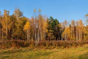 autumn forest nature