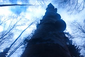 Vertical birch trunk bokeh backgroun