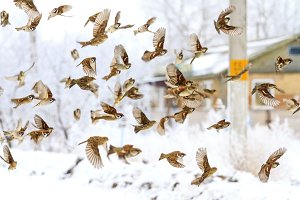 flock of birds flying in the winter