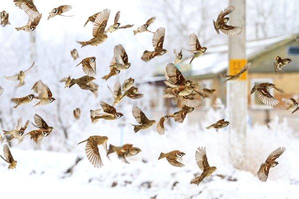 flock of birds flying in the winter