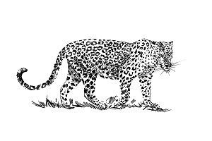 Leopard hand drawn illustrations
