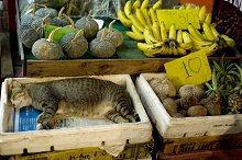 Sleeping cat. Bangkok's Chinatown