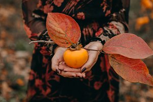 Persimmon in girl's hands