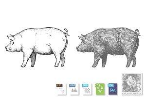 Hand drawn illustration of pig