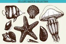 Sea life sketch collection