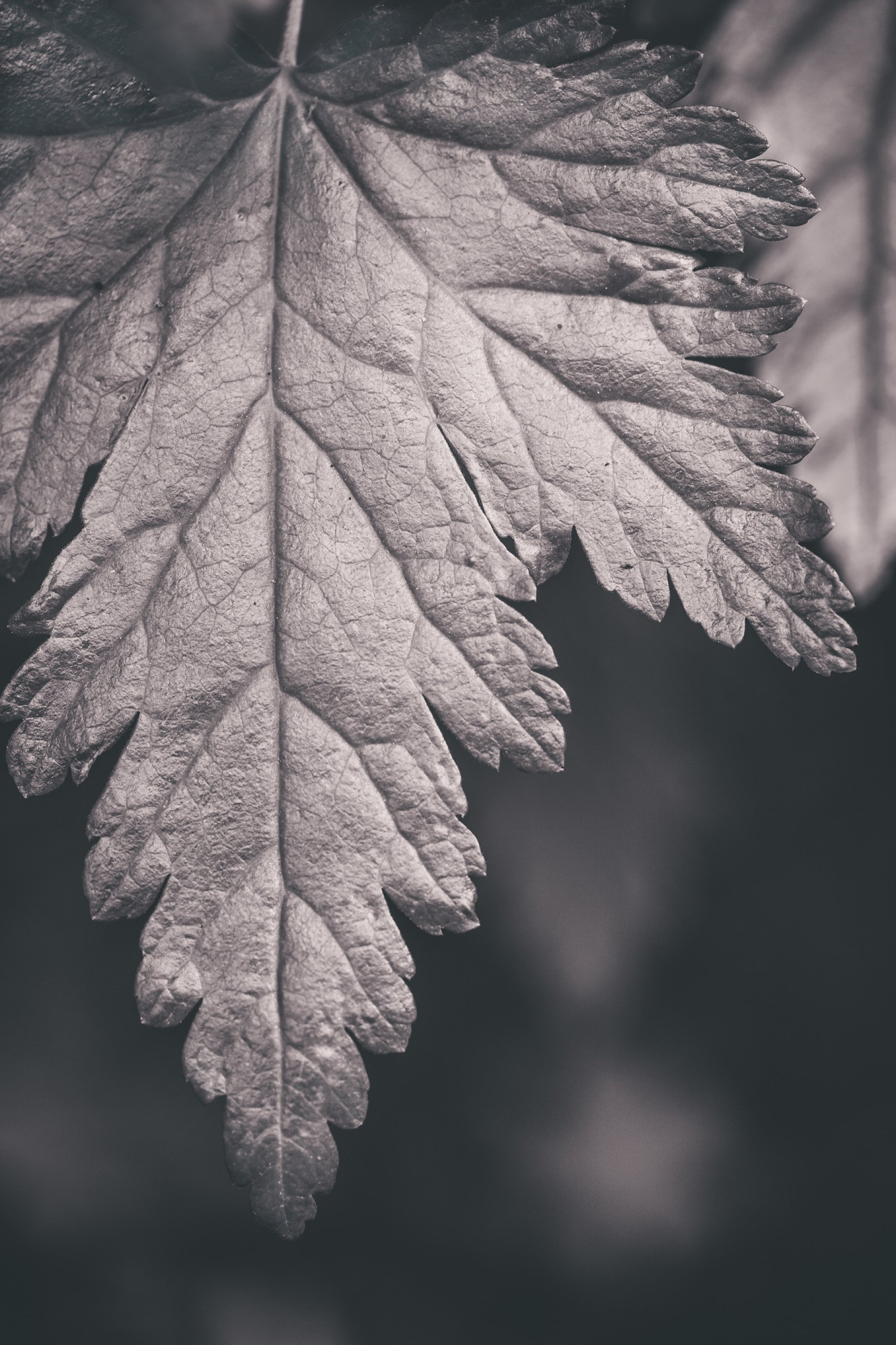 Black and white forest leaf