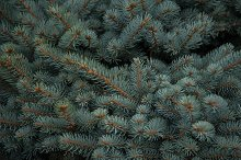 Background texture of fir tree by  in Abstract