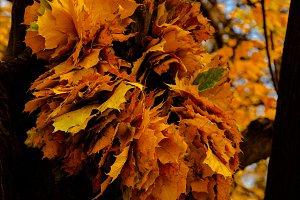 autumn park landscape design