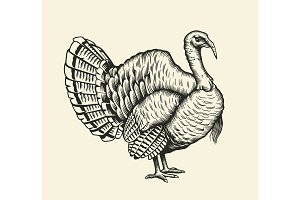 Turkey hand drawn illustration