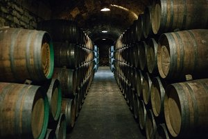 Barrels in an old wine cellar