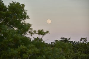 The moon appears at dusk.