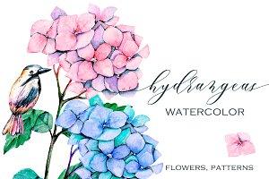Watercolor flowers Hydrangeas.
