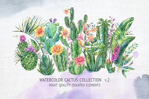 Watercolor cactus collection V.2