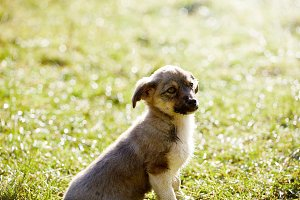 cute puppy is sitting on the grass