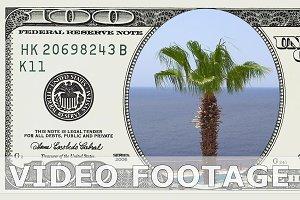 Palm trees in 100 dollar bill