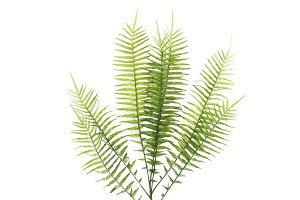 top view of green fern branches isol
