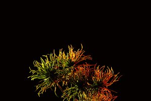 colored picture of beautiful plant w
