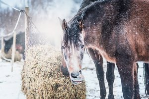 Horse at winter with snowfall