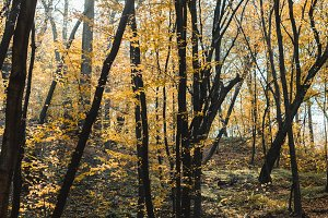 beautiful autumnal forest with yello