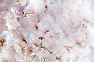 Flower soft pink bouquet background.