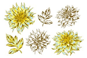 Set of fluffy yellow dahlias and