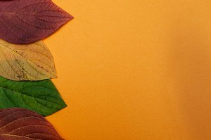 Concept of autumn  backgraund
