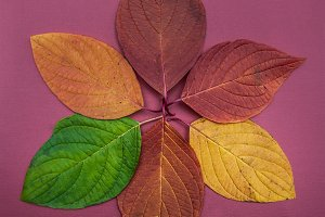 Concept of autumn, colorful leaves
