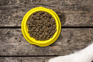 Dogs paws and bowl of dry nutrition