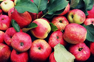 Fallen red apples with leaves. Top v