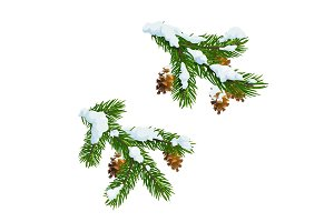 Christmas pine, fir branch in snow